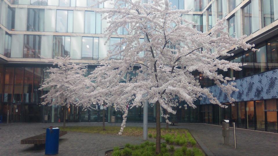 UvA in spring
